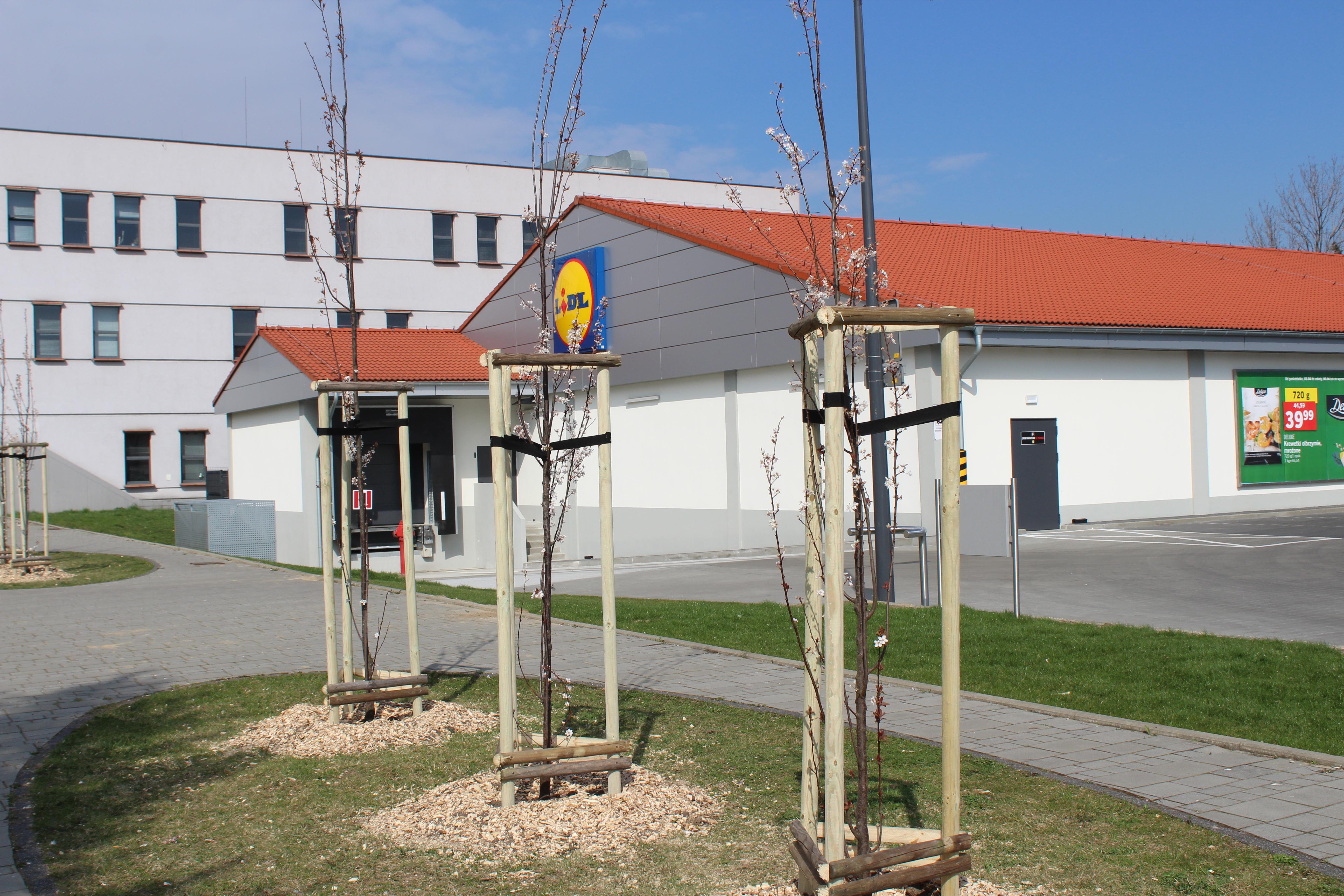 Nowe nasadzenia drzew
